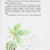 Olivro da 2a classe_pag61.jpg